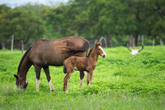 horse and foal costa rica