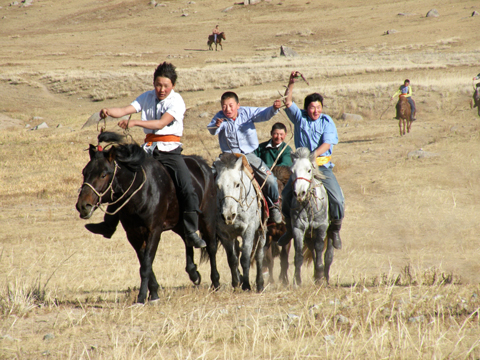 mongolian horse race in the steppe mongolia